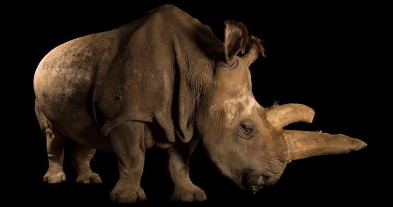 extinct animals 7