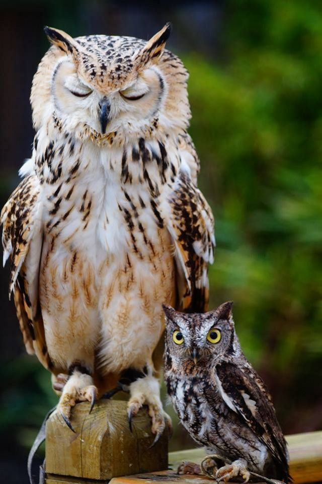 These Are The 100 Greatest Owl Pictures You Will Ever See