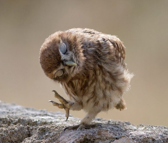 greatest owl pictures 75