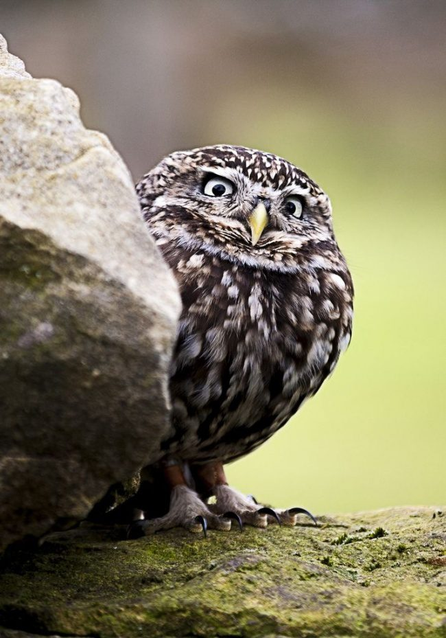 greatest owl pictures 78