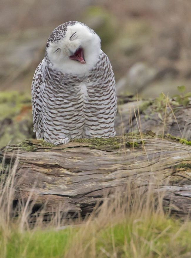 greatest owl pictures 79