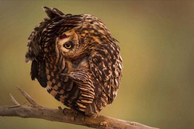 greatest owl pictures 84