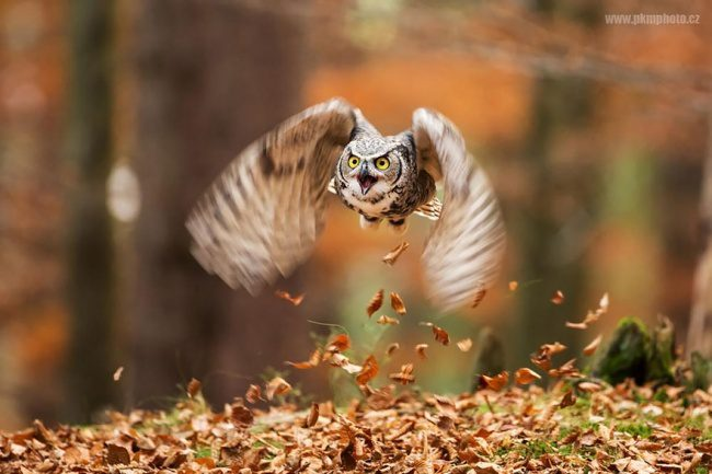 greatest owl pictures 94