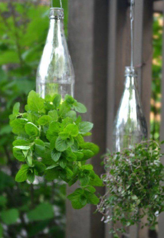 growing organic garden 20