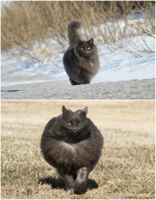 20 Of The Furriest Cats In The World Who Would Love To