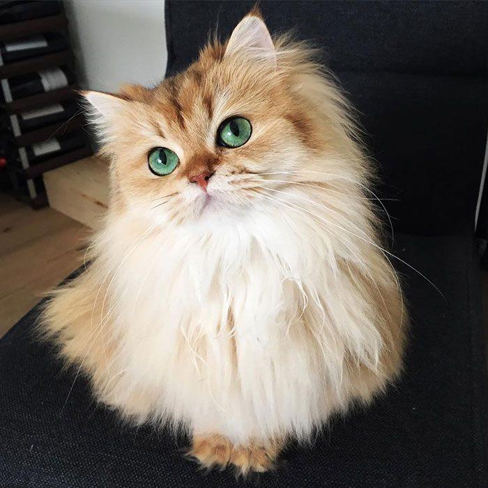 most photogenic cat