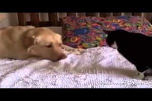 cats and dogs friendship