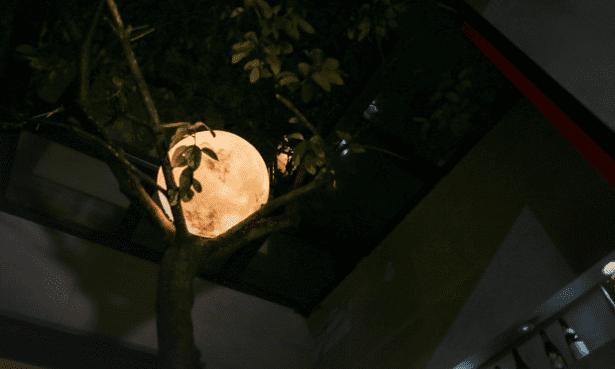 luna lamp 9