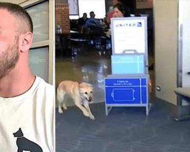 military dog reunion