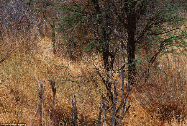 Spot the impala.