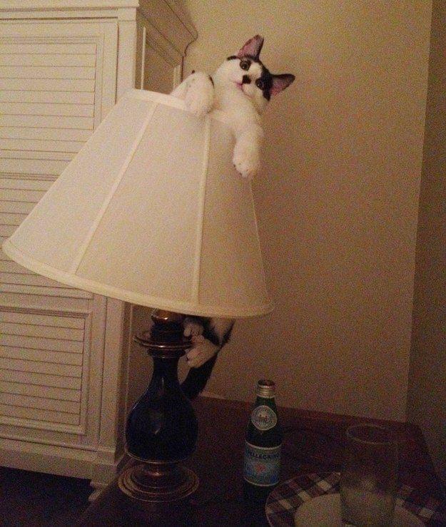 The Lamp Shade