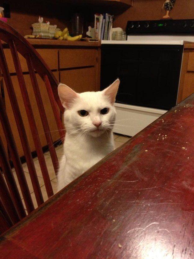 The Displeased Customer