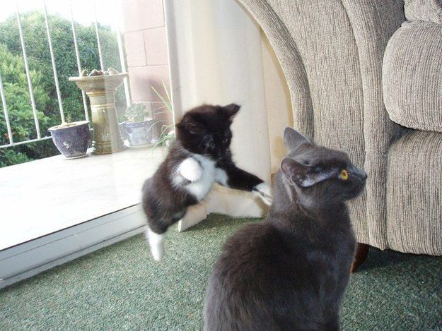 The Surprise Attack