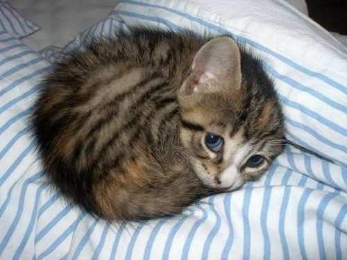 The World's Cutest Kitten