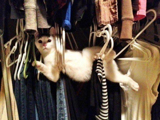 The Closet Dweller