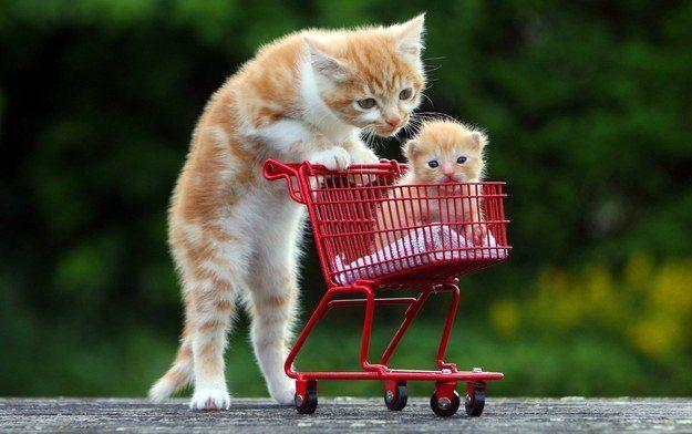 The Kitten Pushing an Even Smaller Kitten in a Tiny Shopping Cart