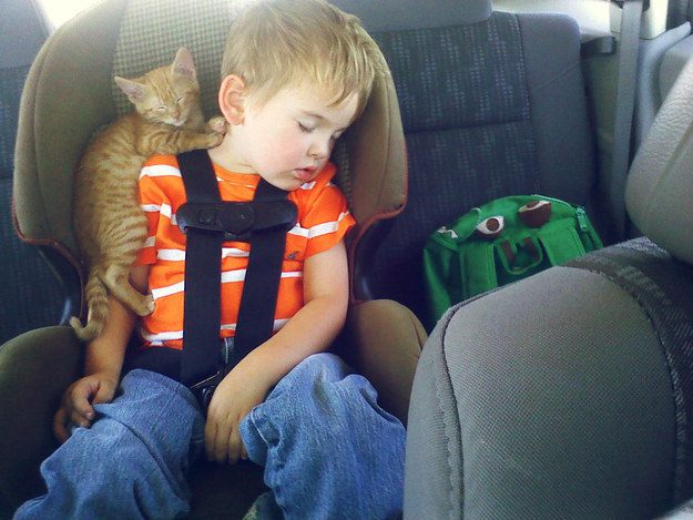Cat Asleep on a Boy in the Back of the Car