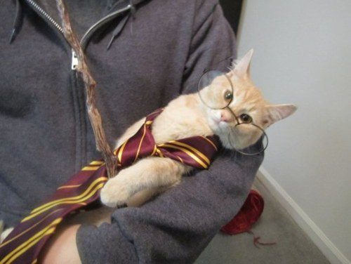 The Harry Potter