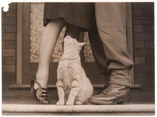 The Cat Upskirt