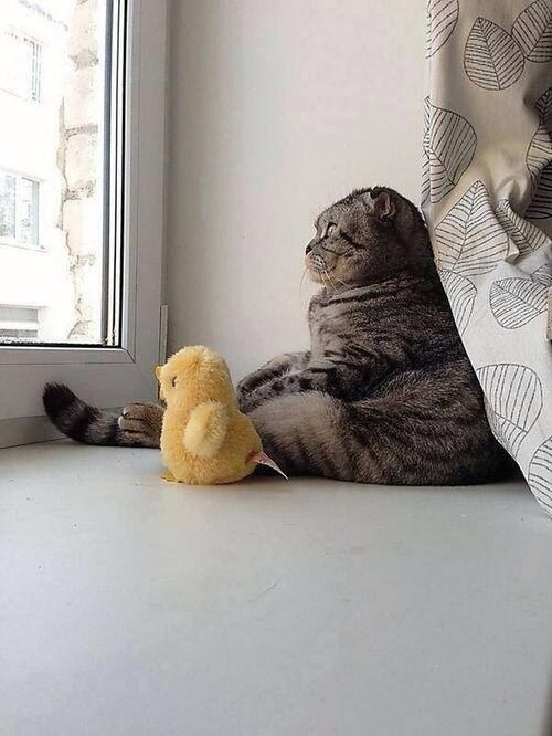 The Existential Cat with His Existential Duck