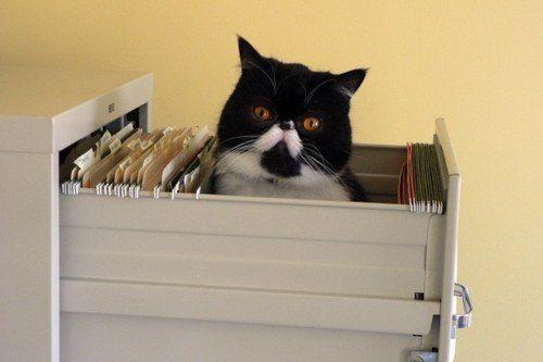 Filing Cabinet Cat