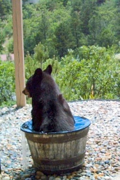 Wait--the bear hasn't been drinking the water.