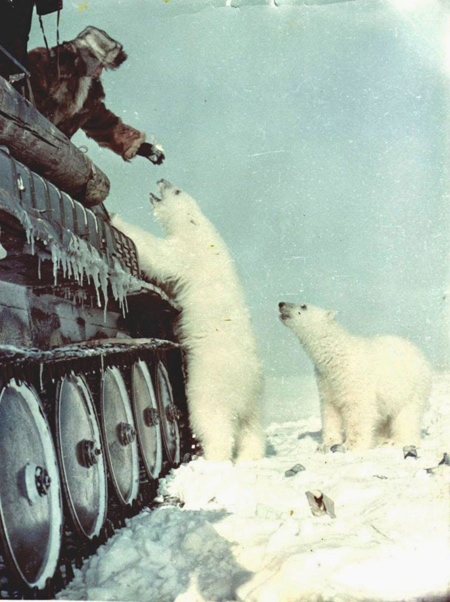 Russian%20soldiers%20feed%20polar%20bears%20from%20their%20tank.%20%5B1950%5D