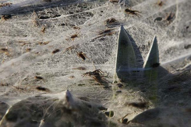 cool-spiders-web-plant-scary