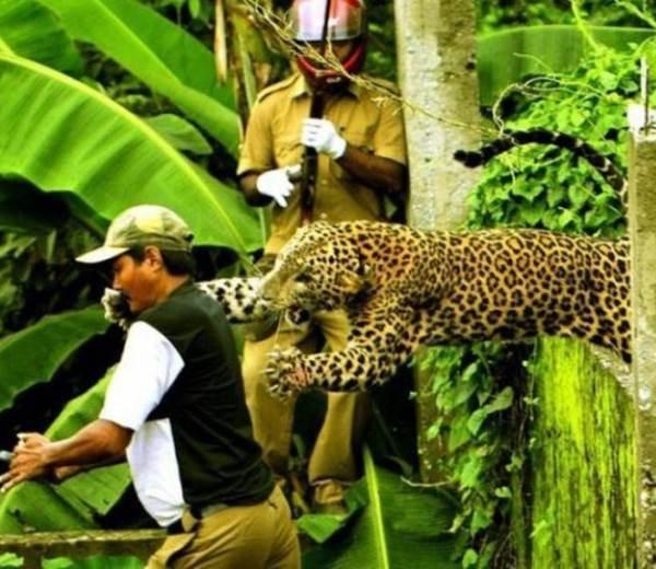 suddenly-a-jaguar