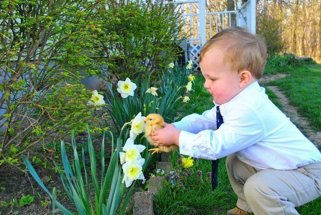 This chick who is smelling a flower for the very first time.