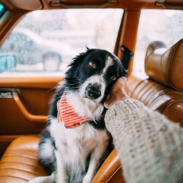 This handsome co-pilot.