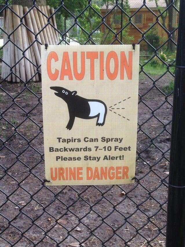 tapir-threat-photo-u1