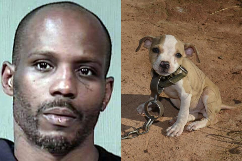 Dmx Arrested Pit Bull Fighting Newslinq
