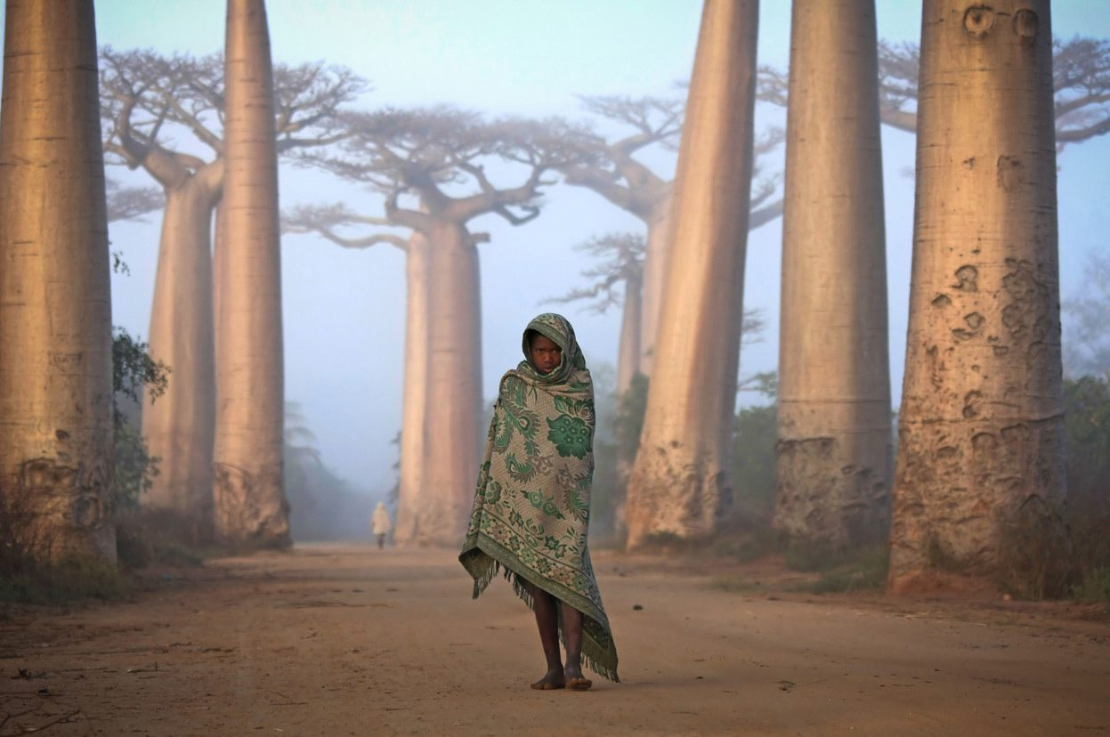 Malagasy girl walks among the Baobab trees.