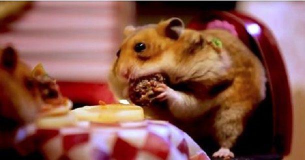 hamstervday