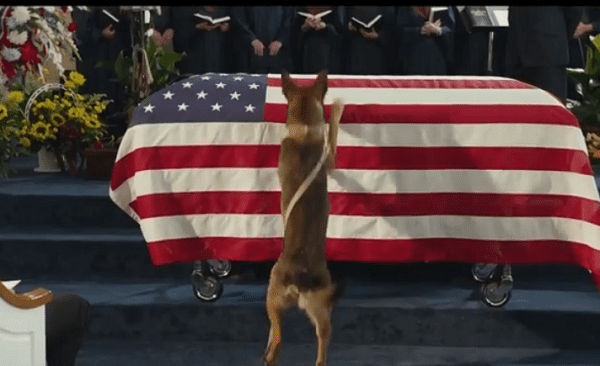 see what this dog does after his marine handler dies in battle