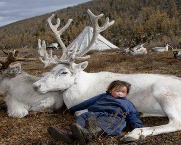 mongolian rainbow tribe