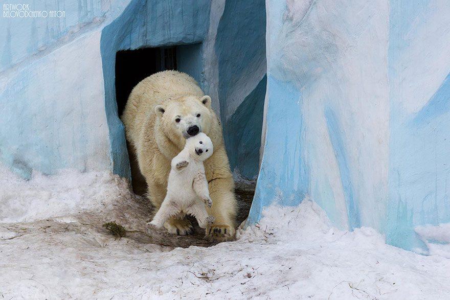 Animal-Parents-1
