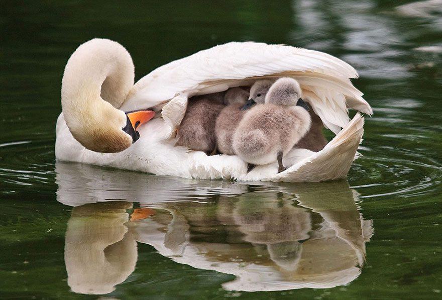Animal-Parents-15