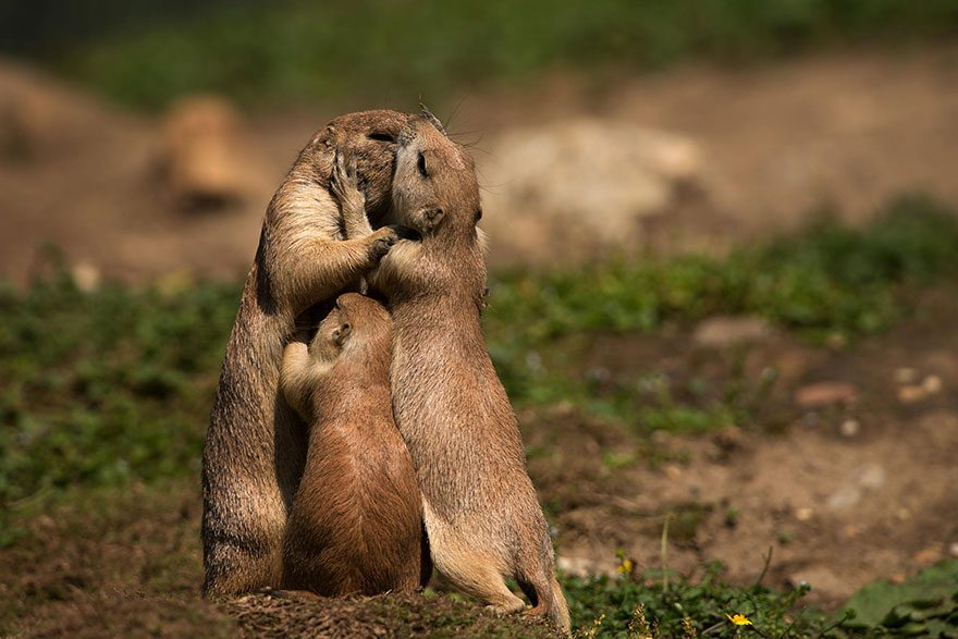 Animal-Parents-16