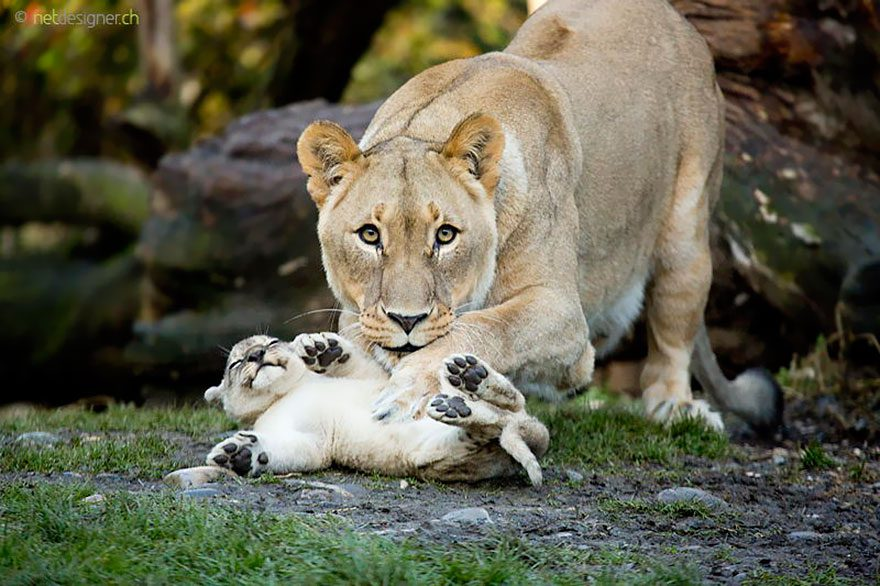 Animal-Parents-18