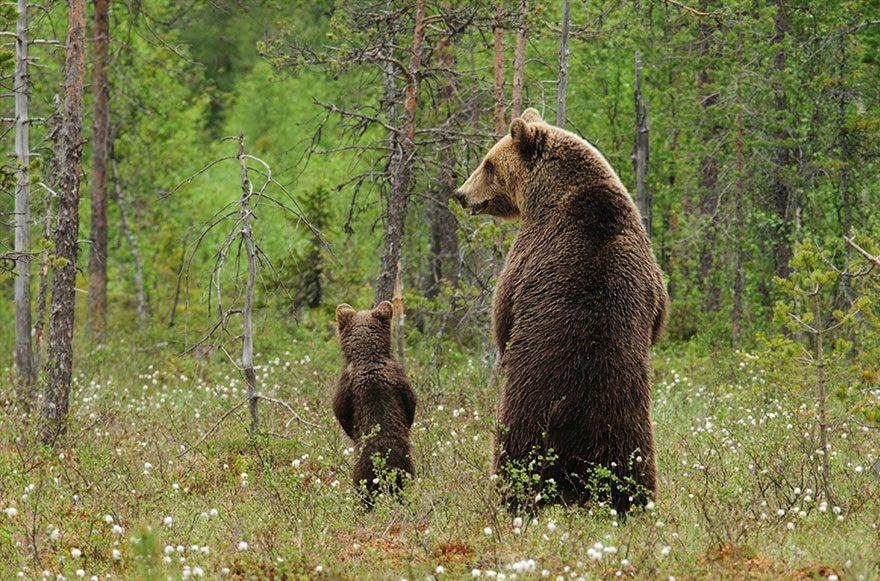 Animal-Parents-25