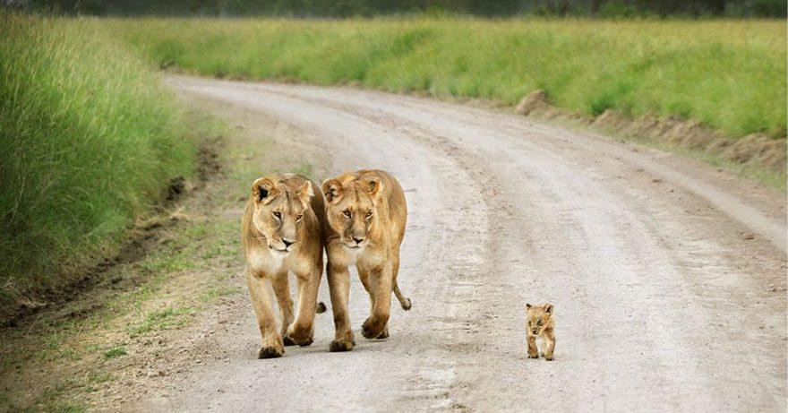Animal-Parents-3