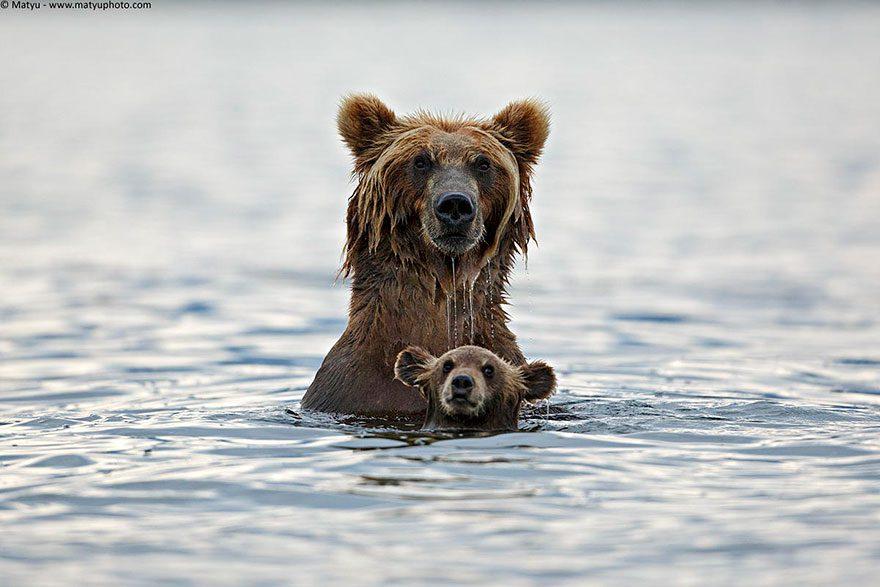Animal-Parents-8