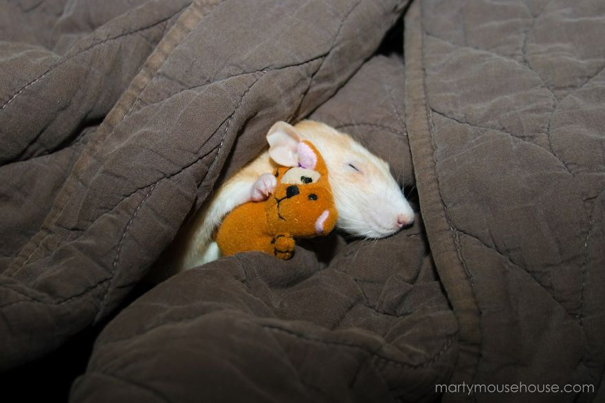 cute-pet-rats-4__880