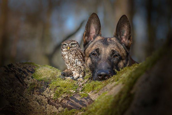 02-dog-and-owl