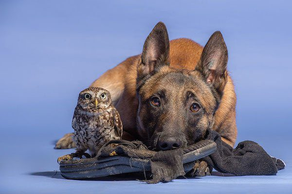 11-dog-and-owl