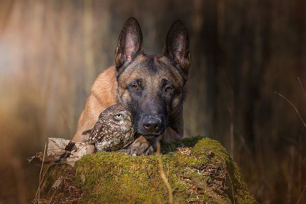13-dog-and-owl