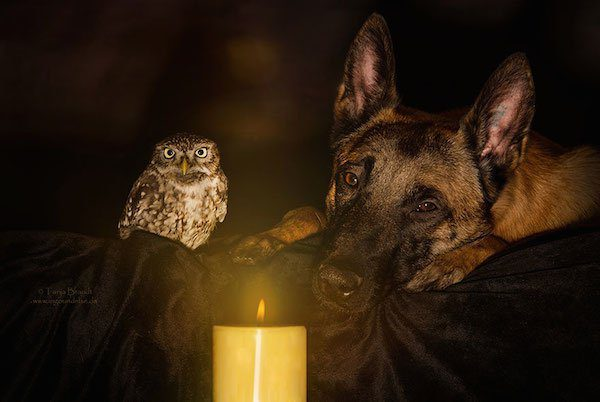 14-dog-and-owl