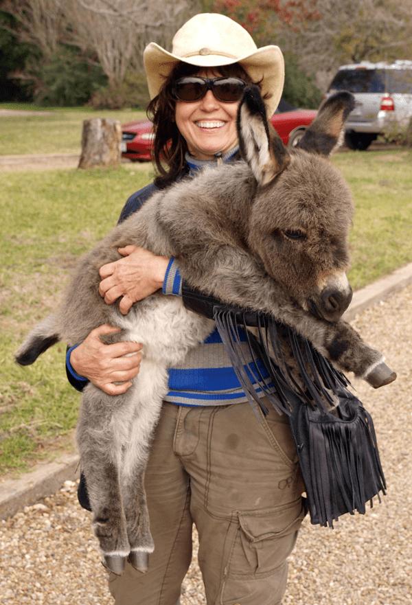 miniature-donkey13